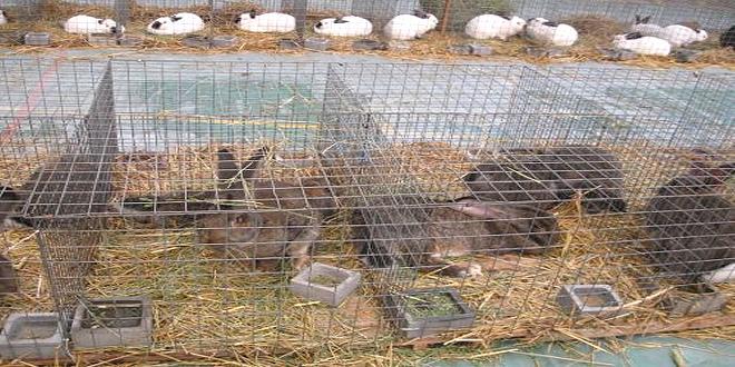 Međunarodna izložba sitnih životinja od sutra u Grljanu