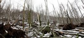 Počelo podnošenje zahteva za sanaciju oštećenih šuma