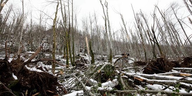 Danas je Svetski dan šuma -NA RTNJU POŠUMLJAVANJE