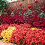 jesenje cvece slike za