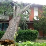 Drvo palo na krov Internog odeljenja zaječarske bolnice -IZBEGNUTA TRAGEDIJA