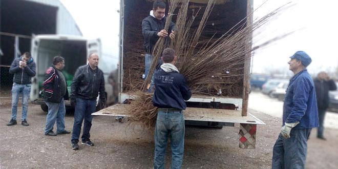 ZAJEČAR: 48 poljoprivrednika dobilo sadnice trešanja, višanja i šljiva