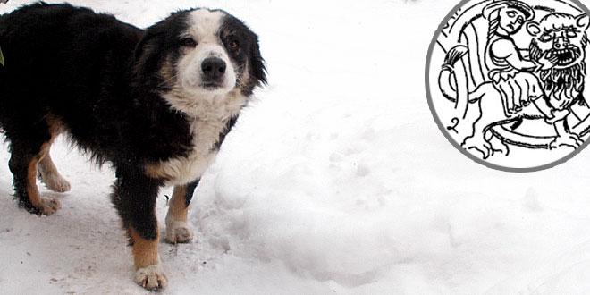 Da li ste znali da u srpskom narodnom kalendaru i psi imaju svoju nedelju? Pasju nedelju