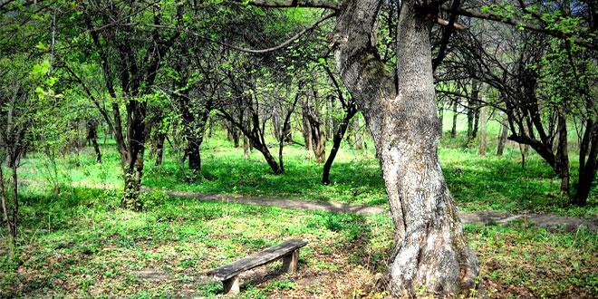 Svetski dan šuma: Čuvajmo park šumu Kraljevica!