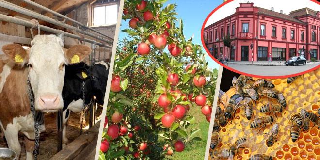Grad Zaječar: Za kredite, voćarstvo, stočarstvo i pčelarstvo 12 miliona dinara
