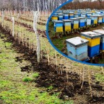 ZAŠTITITE PČELE! Sutra zaprašivanje voćnjaka u Vražogrncu