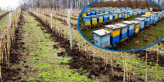Photo of Zaprašivanje voćnjaka u Vražogrncu: Zaštitite pčele!