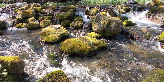 DAN STVOREN ZA ŠETNJU I PRIRODU: U Zaječaru danas prolećne temperature
