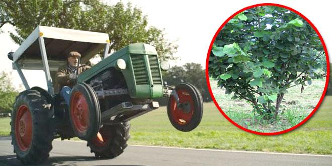 Zaječarac traktorom iščupao 27 stabala lešnika