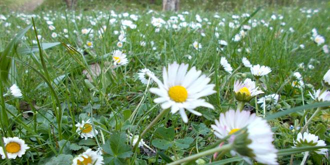 Danas je biljni petak -Evo kakva lekovita svojstva imaju biljke ubrane na ovaj dan!