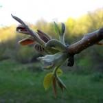 proleće-cvet