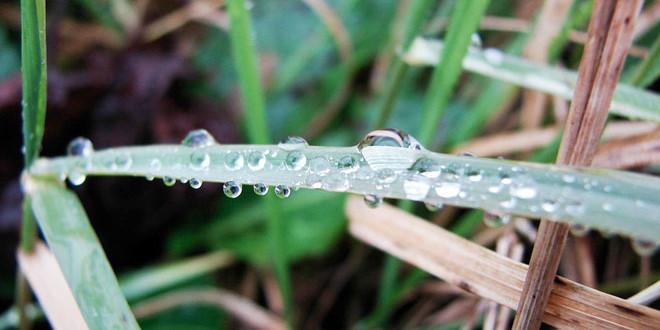 Danas toplo i sparno, za svaki slučaj ponesite kišobran!