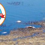 Uginula-riba-na-Grliskom-jezeru