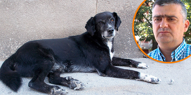 Zaječar u prošloj godini isplatio 12 miliona dinara za ujede pasa! Videnović: Veliki broj pasa smo sterilisali, ali stalno imamo dotok novih, posebno u vreme održavanja velikih  manifestacija!