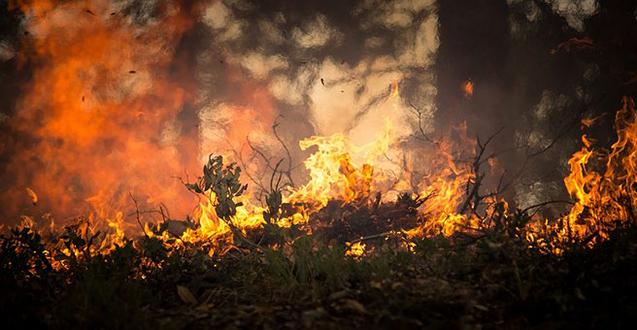 Vojska gasi požar kod Kladova!
