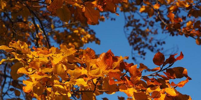 Uživajte u oktobarskom suncu, temperatura do 25 stepeni