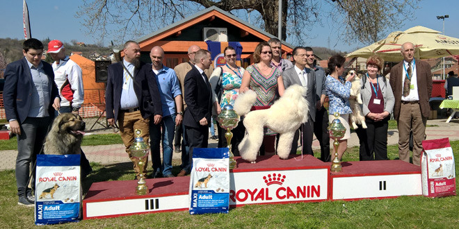 Uspešno organizovana deveta Međunarodna izložba pasa na Popovoj plaži -Evo i pobednika (FOTO)