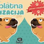 BESPLATNA STERILIZACIJA U ZAJEČARU -Đuričić: Imamo priliku da smanjimo broj napuštenih životinja na ulicama