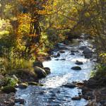 jesen-potok