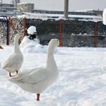 sneg-popova-plaza