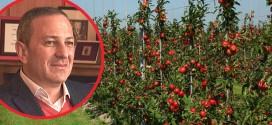Knjaževac: Preko 3.000 hektara pod novozasađenim voćem