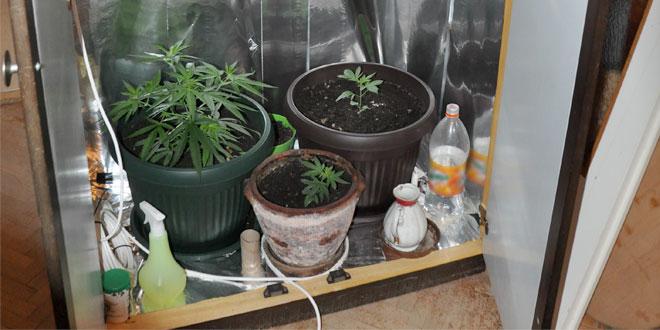 Policija u Boru pronašla improvizovanu mini-laboratoriju za uzgoj marihuane