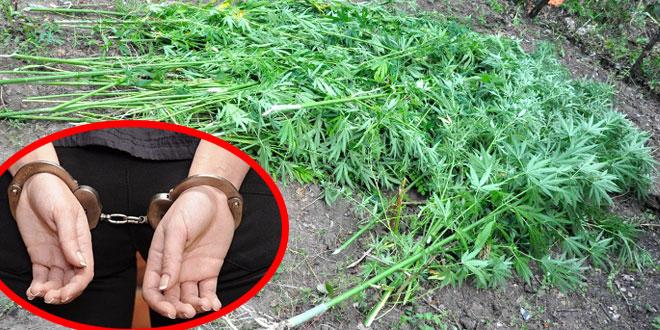Zaječar: Krivična prijava protiv šezdesetpetogodišnje žene zbog droge