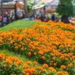 SVEŽE JUTRO, TROPSKI DAN: U Zaječaru danas sunčano i toplo, do 33 stepena