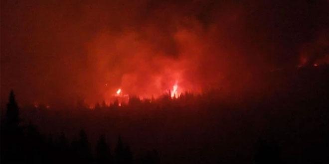 GORE ČETINARI NA STAROJ PLANINI: I zaječarski vatrogasci u akciji -Gašenje požara otežano zbog nepristupačnog terena