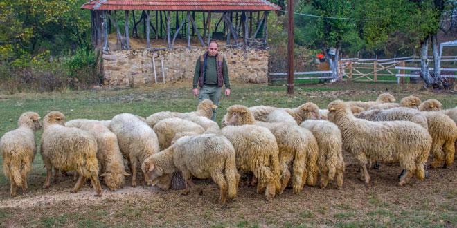 IZ NOVOG SADA SE VRATIO U RODNO SELO! Goran svedoči o prednostima života u lepoj i zdravoj prirodi na istoku Srbije
