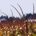 Otvoren treći IPARD javni poziv za podsticaje za preradu hrane -Budžet 5,5 milijardi