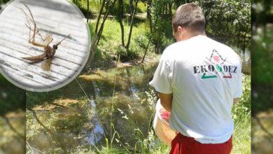 Photo of BORBA PROTIV KRVOPIJA U ZAJEČARU: Ukoliko vremenske prilike dozvole, kreće akcija suzbijanja larvi komaraca