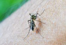 Photo of Odzvonilo larvama komaraca u Knjaževcu