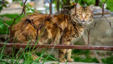Photo of Danas obeležavamo Međunarodni dan mačaka -Ovo možda niste znali o njima